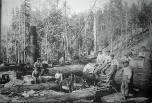 A steam donkey in operation at a McDonald & Vaughan logging camp in Coos County. [CHM 992.8.0508]